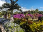Tropical landscaping of Ekahi Village!