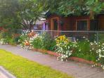 Summer flowers at Cedar Alley in Anchorage, Alaska
