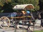 Famous Jaunting Cars