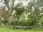 Jardín - Lago con peces