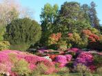 Villa Carlotta is a riot of pink with azalea and rhododendron in springtime