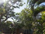 l'espace jardin