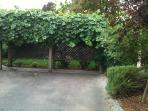 Backyard behind grape arbor.