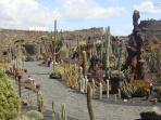 Cactus gardens designed by Lanzarote's famous artist Cesar Manrique