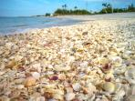 Shell Laden Beaches
