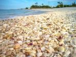 Shell Laden Beaches