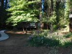 There is a lot of open space in the back yard behind the Big Pine cabin