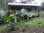 A side view of the cabin. Notice the banana trees and pineapple patch.