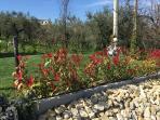 Giardino e aiuole