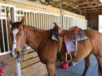 Trail riding horses available.