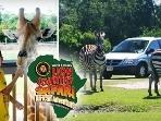 Enjoy an African Adventure just 5 miles away at Lion Country Safari.