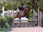 The Palm Beach International Equestrian Festival is just one block away!