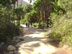 Scenic path to Las Palmas beach, 5 miles south of Todos Santos.