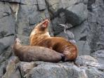 Seals on Friars Rocks