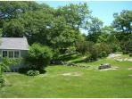 Verdant and lush back yard