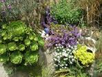 semi tropical rockery plants