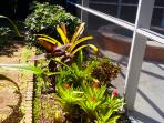 Tropical plantings by the pool