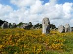Megalithic Standing Stones at Carnac