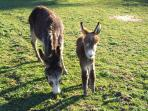Our donkey Poppy (on the right)
