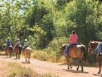 Horseback riding thru the Central Florida Trails