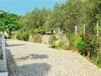 Georges back garden