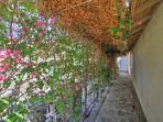 Enjoy a walk down this flower-filled walkway.