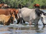 wild horses down by the river, 9 miles away