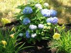 flowers/ yard