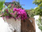 beautiful Loreto flowers