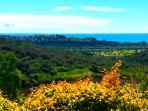 Ocean view South