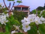 The villa among pear flowers!