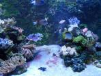 The Aquarium at Talmont St Hilaire