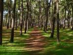 A Forest Walk at La Faute sur Mer