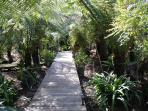 Boardwalk in the garden