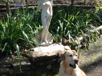 Jack our Labrador