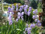 Spring in Cotignac