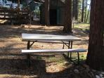 Picnic table under the pine trees