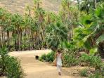 The walk to 'Las Palmas' beach, through the palm grove