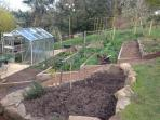 Guests can sometimes obtain produce from our productive vegetable garden