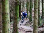 Bike Tracks  On-Site