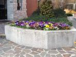 the flowerbed at the entrance