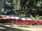 The park opposite the apartment building