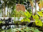 Nénuphars, lotus et poissons du bassin
