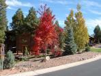 Fall trees in Bison Ridge.