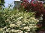 Giardino con l'esplosione dei colori estivi