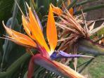 alcune belle piante e fiori di villa adriana