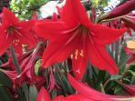 fiori del giardino