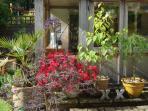 Garden at Tinsmith's House