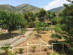 Il giardino pieno di alberi da frutta