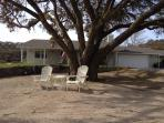Want to have a contemplative moment?  Lounge under the oak tree.